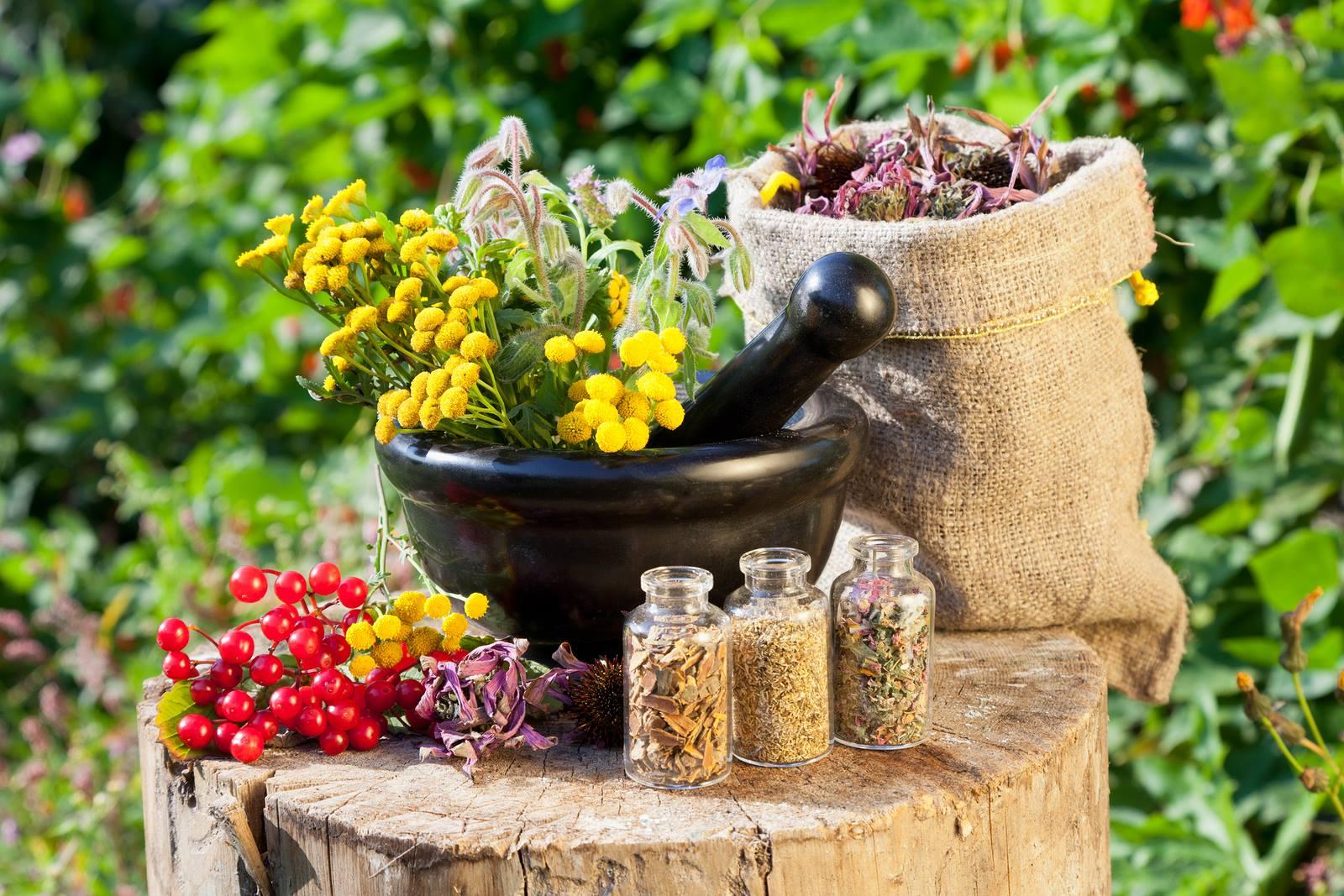 11 گیاه که پرکاربرد برای منزل