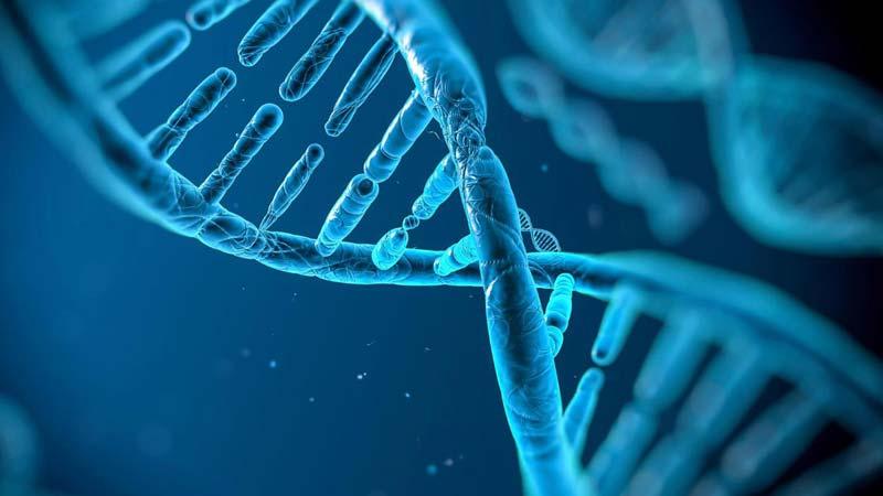 شناسایی و غربالگری ژن های مستعد در بروز رفتارهای مجرمانه به منظور پیشگیری از جرم (قسمت پایانی)