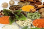 11 گیاه دارویی پرکاربرد برای منزل