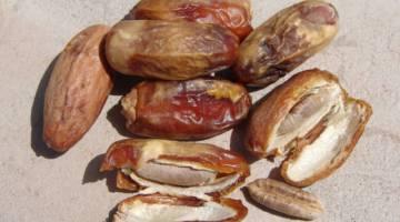 هسته خرما | فواید هسته خرما برای بیماری ها