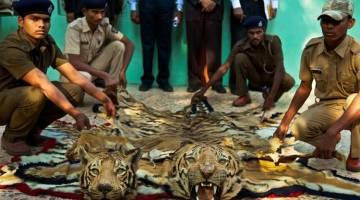 حیوان آزاری و نقض حقوق حیوانات در صنعت توریسم | نام 10 حیوان در معرض آزار در گردشگری