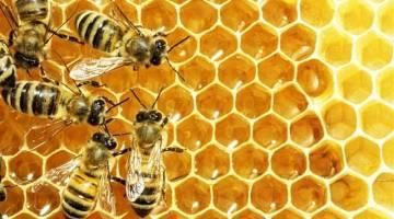 زهر زنبور عسل و خواص شگفت انگیز آن